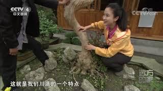 [远方的家]大好河山 岷江边的川派盆景第一村| CCTV中文国际
