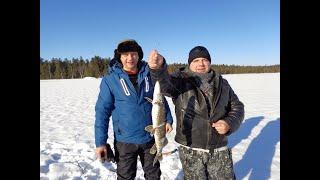 Зимняя рыбалка на чудесных озёрах 3 Килошный окунь атакует Щука на жерлицы Классная погода февраля