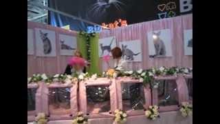 Русская голубая кошка на выставке Инфокот 2011