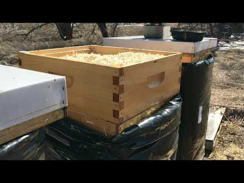 Beekeeping First Spring Day At The Apiary. Pollen And Sugar Feeding In Spring