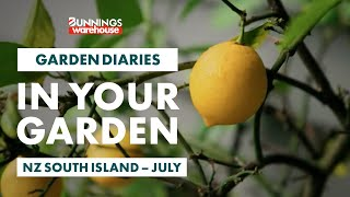 Gardening in July   NZ South Island   Bunnings Garden Diary