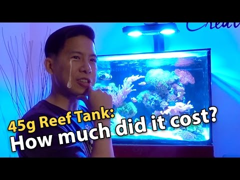 Cost of Setting Up a 45g Reef Aquarium (and load it up with corals)