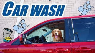 Earl The Funny Puppy Drives To The Car Wash! Dog Reacts
