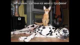 Уморительные коты. Мегаржач! Смотреть всем!