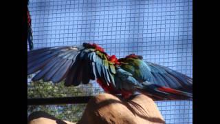 """""""O QUE SERÁ"""" : Chico Buarque (Trilha sonora Dona Flor e seus dois Maridos) Parque das Aves de Foz"""