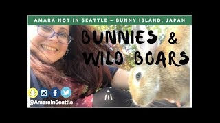 Japan Travel Adventure Rabbit Island | Travel Tuesday w/ Amara Not In Seattle