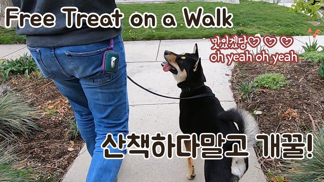 산책하다 얻어먹으면 더 꿀맛!