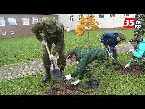 Живая изгородь украсит сквер у детской областной больницы в Вологде