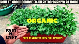 How to Grow Coriander/Cilantro/Dhaniya at Home-FULL INFORMATION
