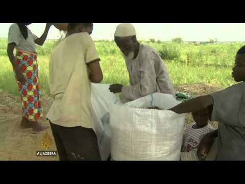 Violence curbs farm productivity in Nigeria