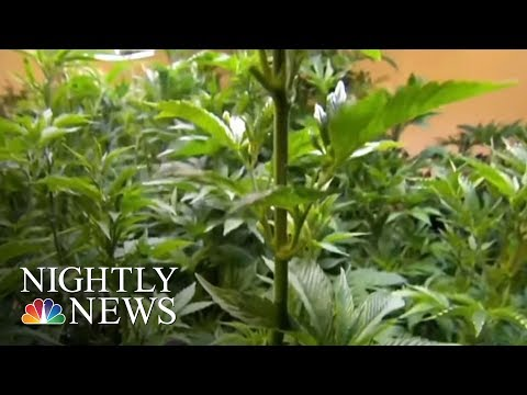 Nevada Marijuana Shortage: State Officials Scramble To Stock Up | NBC Nightly News