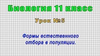 Биология 11 класс (Урок№5 - Формы естественного отбора в популяции.)