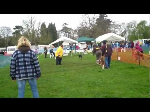 Selby Game Fair - Flyball - Carlton Towers