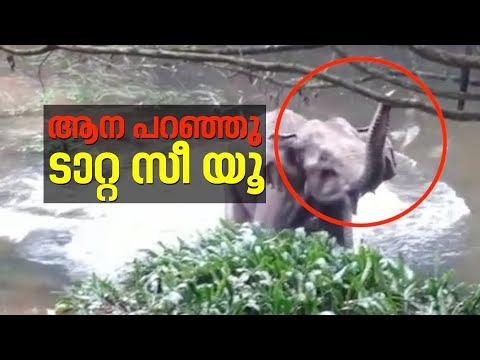 കുട്ടിയാനയെ രക്ഷിച്ച നാട്ടുകാർക്ക് ടാറ്റ പറഞ്ഞ് അമ്മയാന   Baby Elephant rescued in Kerala