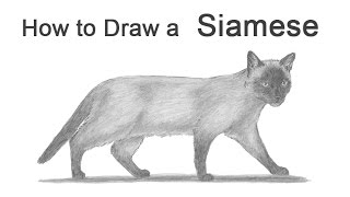 How to Draw a Cat (Siamese)
