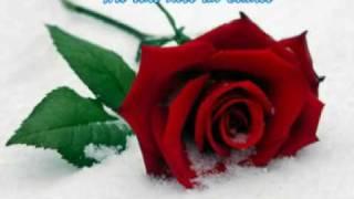 Daniela Alfinito - Wie eine Rose im Schnee thumbnail