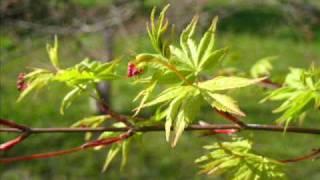 Frühling und Tommaso Albinoni - Sonata a cinque g-moll Op.2 Nr.6
