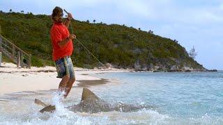 Sharks Swim on to Beach to Capture Prey