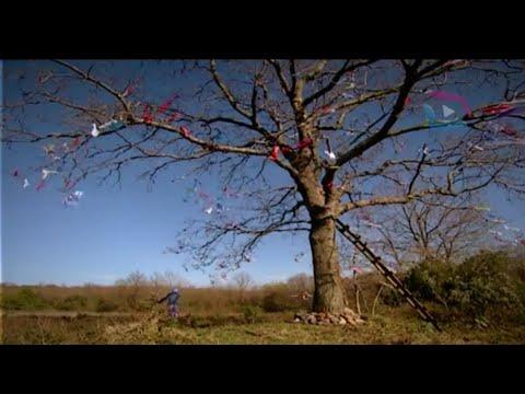 Büyük Buluşma - Çaput Ağacı ile Gelen #büyükbuluşma #sırlardünyası #izle #samanyolu #dizi