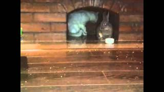 История любви кошки Муси и кролика Пуси