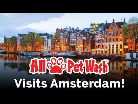 All Paws Pet Wash - Travel Log 2 - Amsterdam Edition