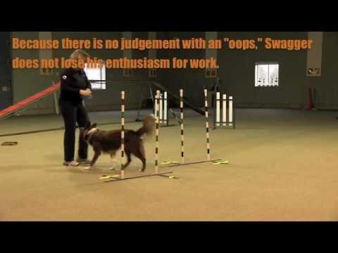 Non Reward Markers In Dog Training: Effective Use sgda