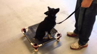 Amazing! Reno Dog Trainer Fixes Dog Aggression Problem In Minutes Using Remote Collar