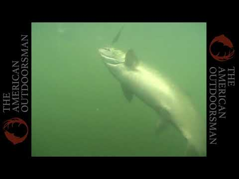 Trolling Chinook Salmon In Roseburg, Oregon