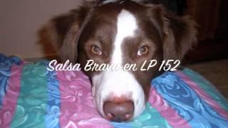 Salsa Brava en LP 152  - Bamboleate  - Eddie Palmieri / Calt`Jader