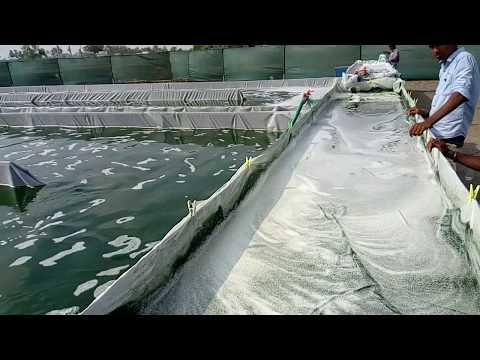 Spirulina Manufacturing