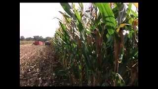 Ovogodi�nji rod kukuruza i soje u dobrom stanju