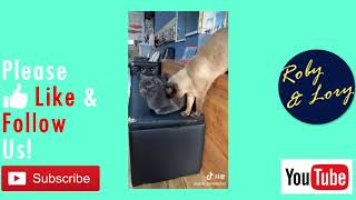 Brown Cat Try To Annoying Black Cat But Falled Funny Cat Video
