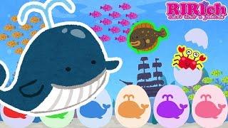 【海のいきもの】たまごのおもちゃアニメ りりちゃんねるの動画では た...