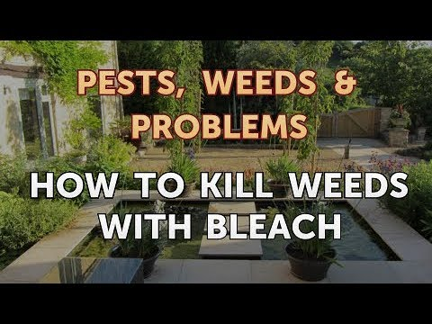 How To Kill Weeds With Bleach Youtube