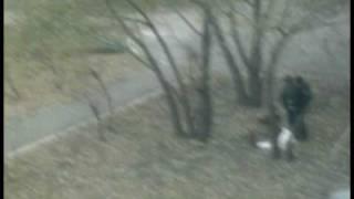 чувак жарит шашлыки прямо во дворе хД