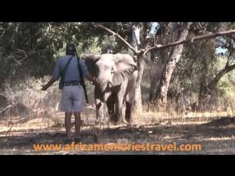 Charging Elephant on foot in Mana Pools