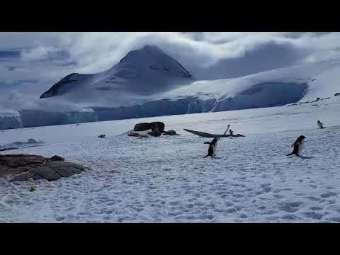 Antarctica 2017!  Featuring: penguins, icebergs and sunsets.