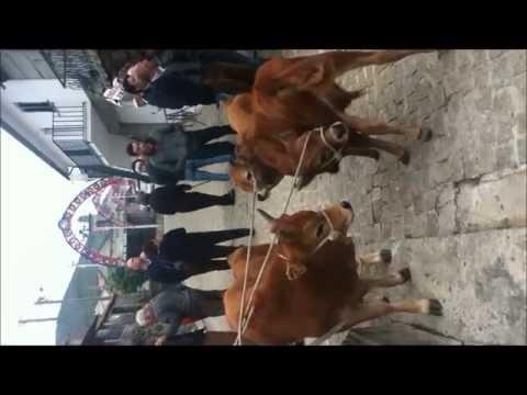 Portuguese Cattle Auction
