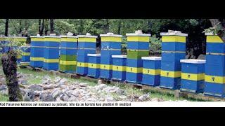Prednosti pčelarenja sa dve matice u Farar košnici