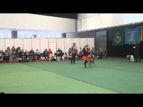 Jataburu Sand Dog Shaula in group finals Vilnius Cup -16