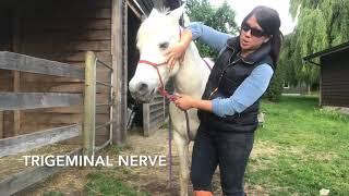 Jenna - Cranial Bones Assessment, Palpation, and Treatment