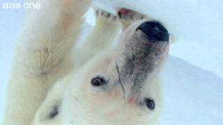 HD: Wild Polar Bears Playing Football! - Polar Bear: Spy On The Ice, Preview - BBC One