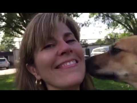 Katrina. Rough- got adopted! thumbnail