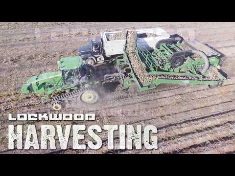 LOCKWOOD Potato Harvesting
