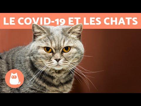 Le COVID-19 et les CHATS �� Sont-ils contagieux ? Le transmettent-ils ?