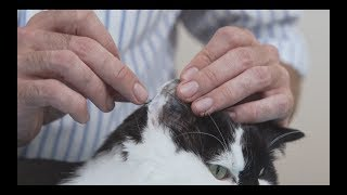 How to measure blood glucose in a cat - Diabetic cat