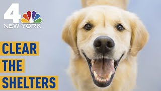 Give a Pet a Forever Home at Clear the Shelters This Weekend! | Clear the Shelters