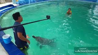 Север Бали. Отель Melka. Купание с дельфином. Цена. 10.01.18г