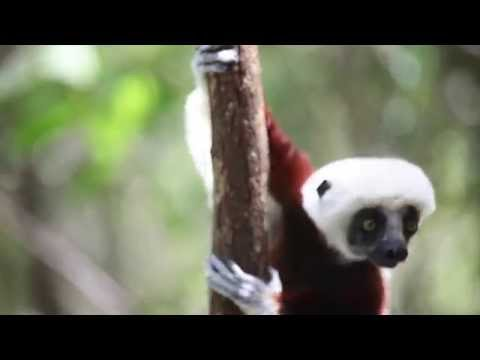 The Wilds of Madagascar - Wildlife and Adventure on Africa's Largest Island