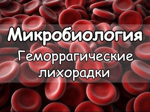 Геморрагическая лихорадка: симптомы, диагностика, лечение